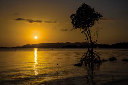 名蔵湾のマングローブと夕焼け。石垣島で
