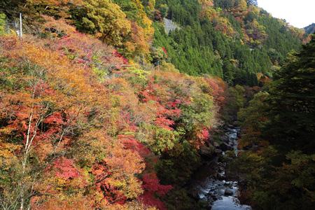 多摩川に沿って紅葉がしたたる奥多摩の秋(奥多摩観光協会提供)