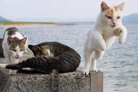 たくさんの猫が迎えてくれる佐柳島は、全国の猫好きが集まる人気スポット