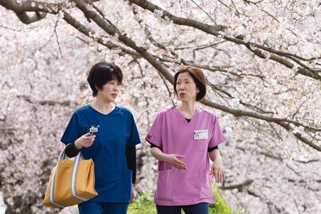満開の桜並木のもとを「気になる患者訪問」に向かう藤原さん(左)と森師長